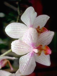 A pretty orchid